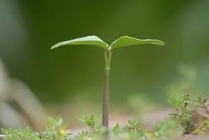 Grow Your Church